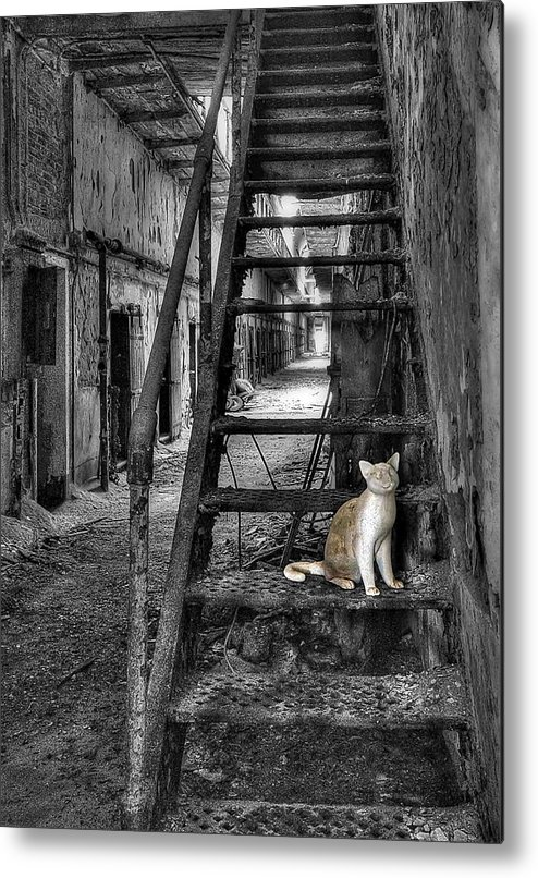 Abandoned Metal Print featuring the photograph Here Kitty Kitty Kitty... by Evelina Kremsdorf