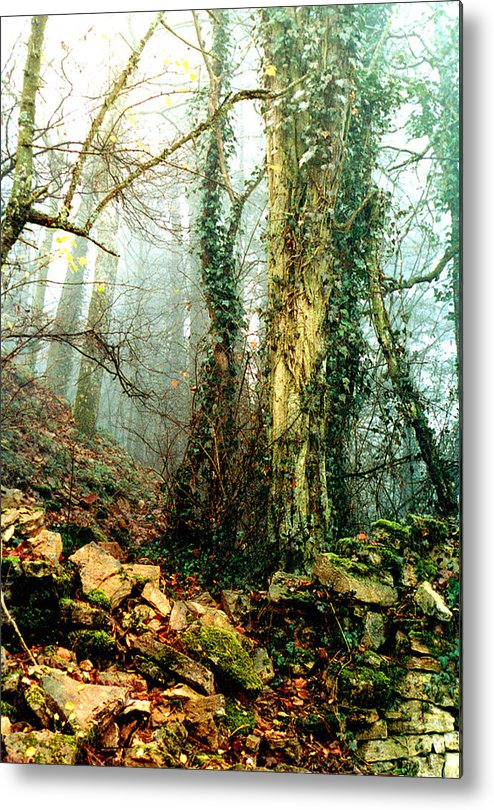 Ivy Metal Print featuring the photograph Ivy In The Woods by Nancy Mueller