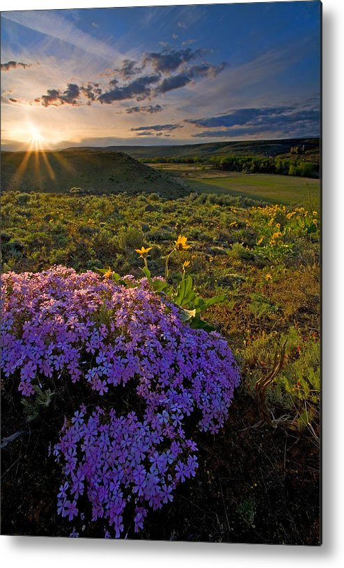 Wildflowers Metal Print featuring the photograph Last Light Of Spring by Mike Dawson