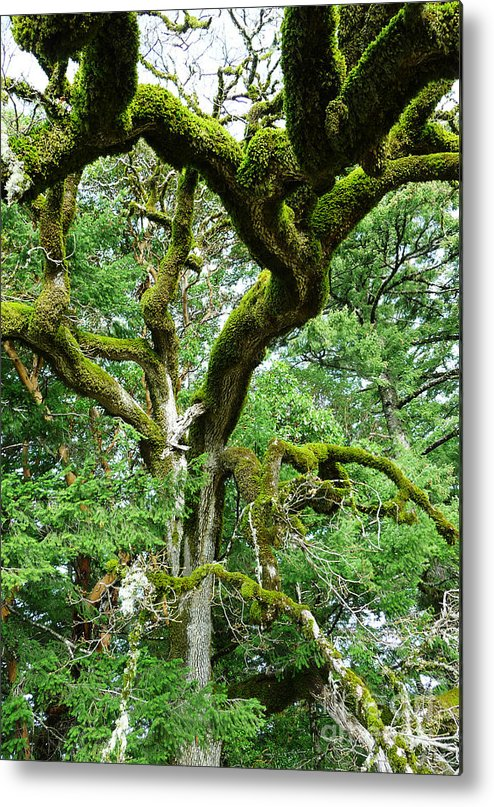 Tree Metal Print featuring the photograph Moss Covered Arms by JoAnn SkyWatcher