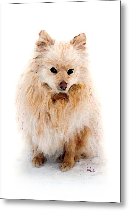 Pomeranian Metal Print featuring the pastel Pip by Brent Ander
