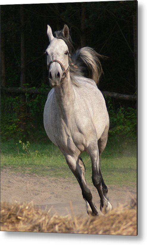 Animal Metal Print featuring the photograph Running Horse by Jaroslaw Grudzinski