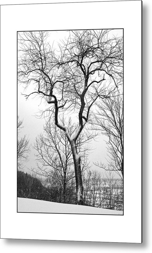 Tree Metal Print featuring the photograph Tree On The Western Promenade by Filipe N Marques