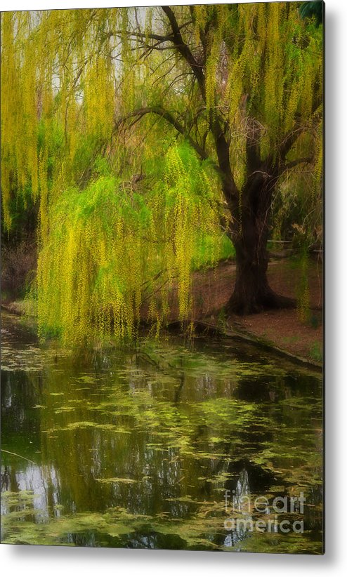 Botanica Metal Print featuring the photograph Weeping Pond by Fred Lassmann