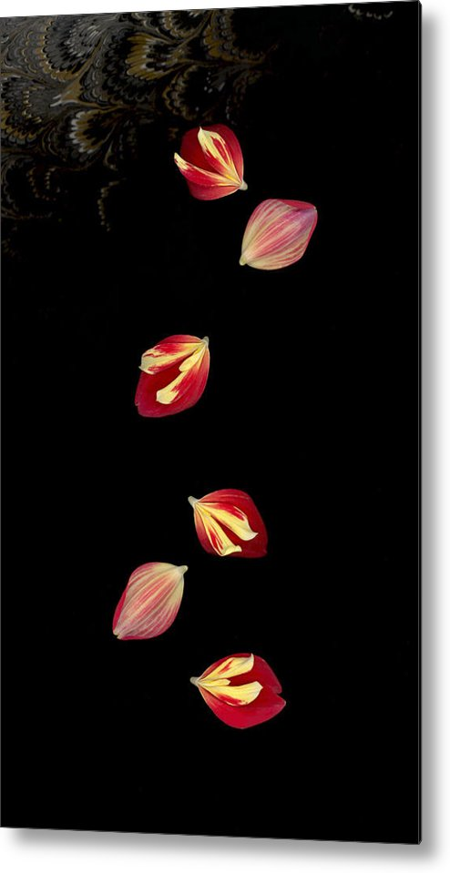 Petal Metal Print featuring the photograph Falling by Suzanne Gaff