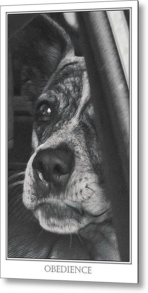 Dog Metal Print featuring the photograph Jazz by Karen W Meyer