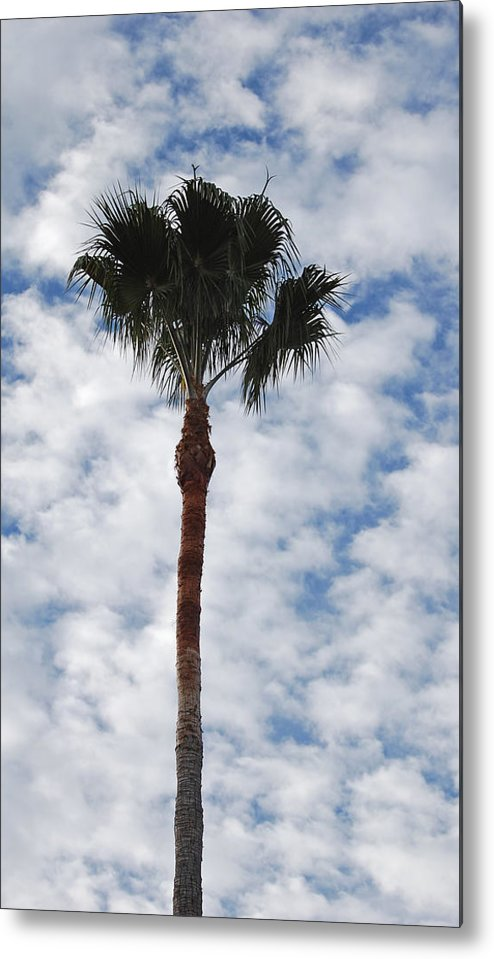 Sky Metal Print featuring the photograph Palm And Clouds by Jean Booth