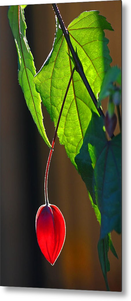 Plant Metal Print featuring the photograph Hanging Red by Chet King