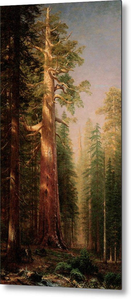 Albert Bierstadt Metal Print featuring the painting The Great Trees Mariposa Grove California by Albert Bierstadt