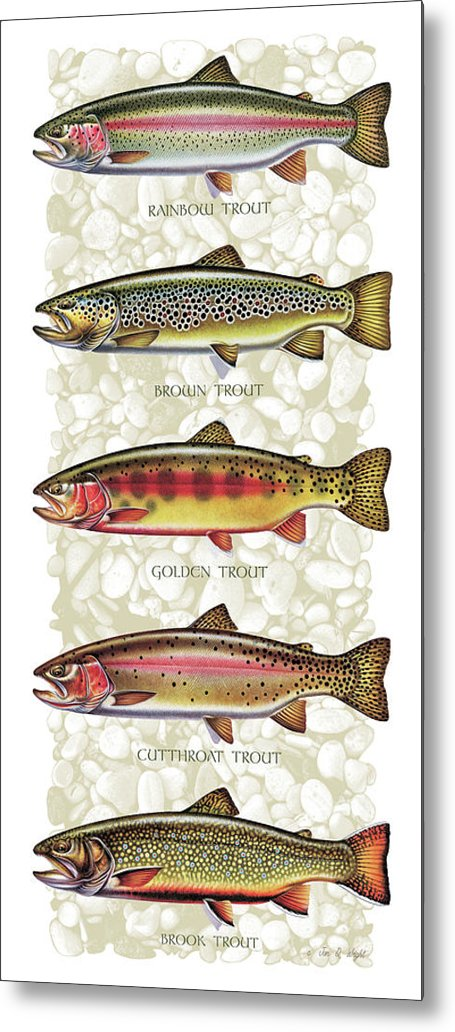Five Trout Panel Metal Print featuring the painting Five Trout Panel by JQ Licensing