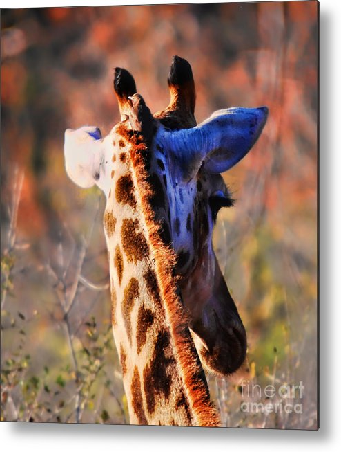 Alexandra Jordankova Metal Print featuring the photograph Bashful Giraffe by Alexandra Jordankova