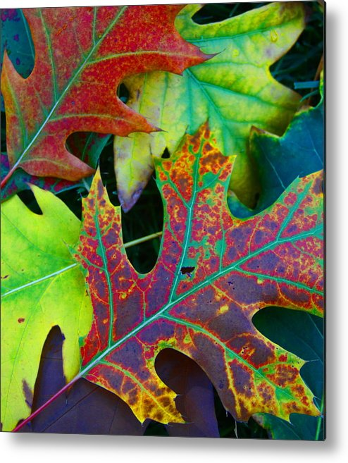 Nature Metal Print featuring the photograph Colors Of Fall by Greg Thiemeyer
