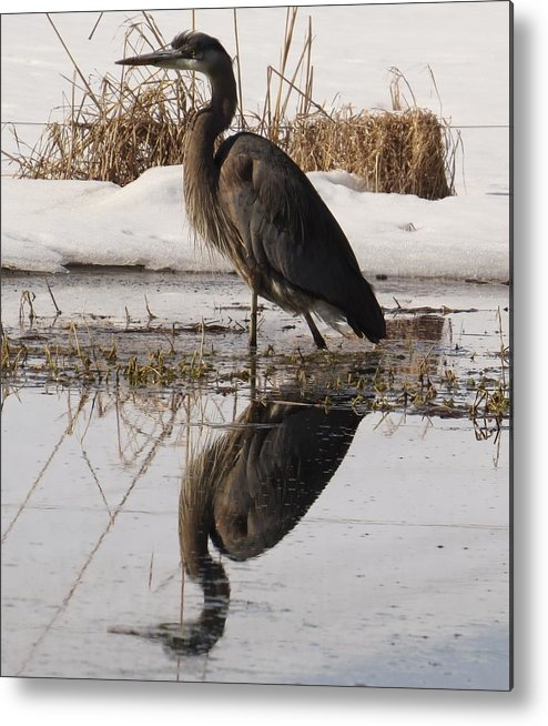 Bird Metal Print featuring the photograph I Like My Shadow by Jeanette Oberholtzer