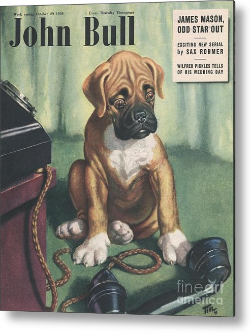 1940�s Metal Print featuring the drawing John Bull 1949 1940s Uk Dogs Magazines by The Advertising Archives