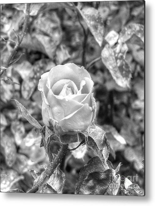 Rose Black Metal Print featuring the mixed media Rose Black by Yury Bashkin
