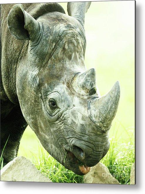 Lion Metal Print featuring the photograph Rhino by Shaun Wilkinson