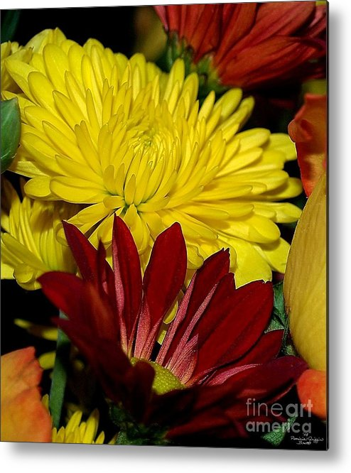 Chrysanthemum Photography Metal Print featuring the photograph Autumn Colors by Patricia Griffin Brett