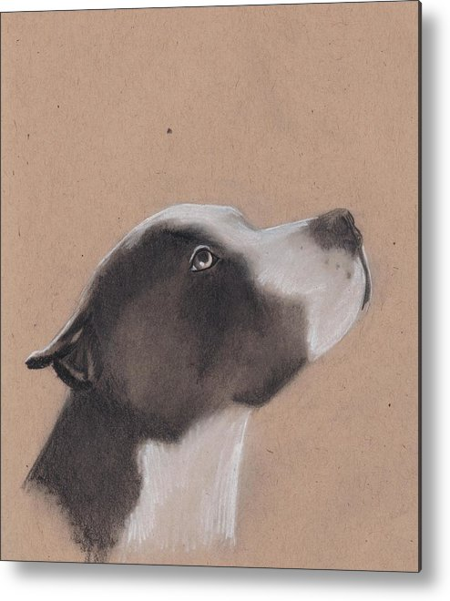 Pit Bull Metal Print featuring the drawing Jesse by Stacey Jasmin
