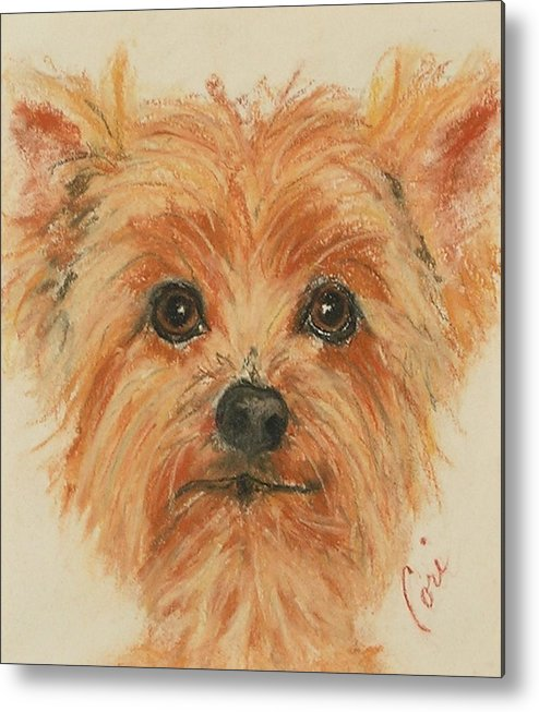 Pastel Metal Print featuring the drawing Lil Rascal by Cori Solomon