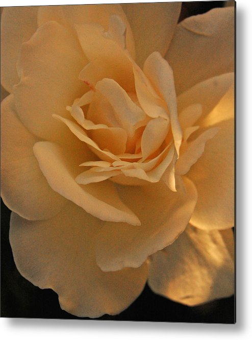 White Metal Print featuring the photograph Rosy Afternoon 4 by Jean Booth