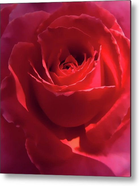 Rose Metal Print featuring the photograph Scarlet Rose Flower by Jennie Marie Schell