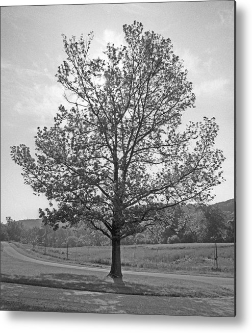 Trees Metal Print featuring the photograph Sunlit Tree by Paul Trunk