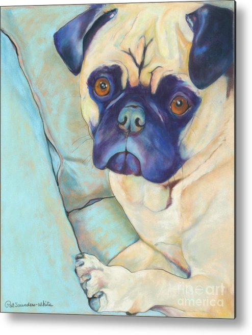 Pug Metal Print featuring the pastel Valentino by Pat Saunders-White