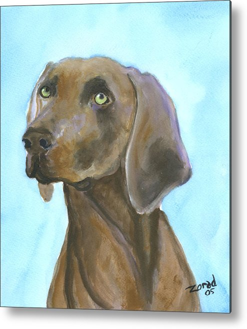 Dog Art Metal Print featuring the painting Weimarainer Dog Art by Mary Jo Zorad