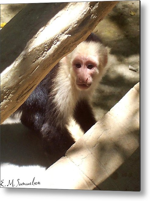 Monkey Metal Print featuring the photograph Wild Little Monkey by Elise Samuelson
