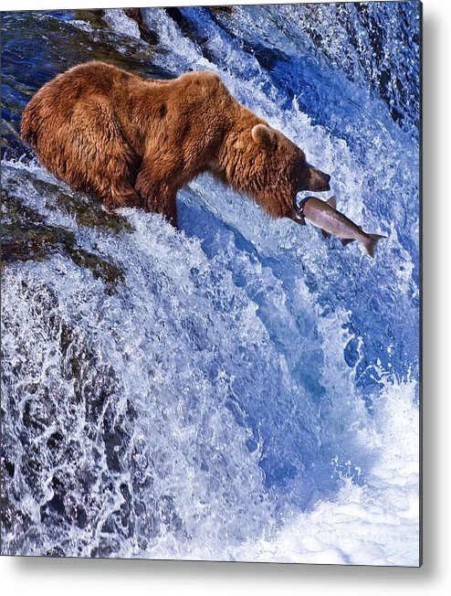 Grizzly Metal Print featuring the photograph Grizly Bears At Katmai National Park by Gleb Tarro
