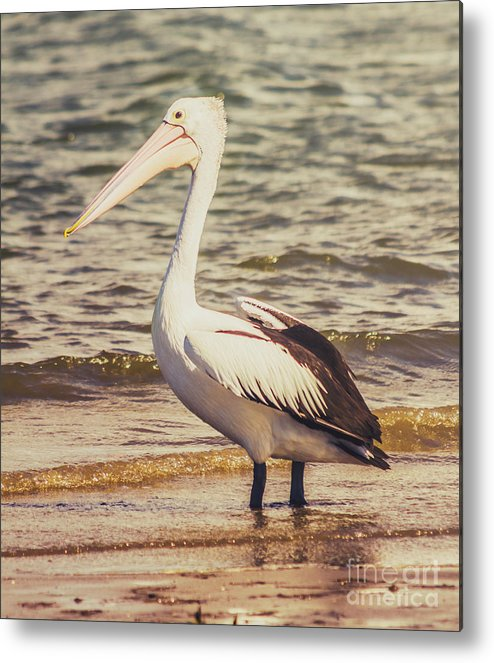 Beach Metal Print featuring the photograph Faded Summers by Jorgo Photography - Wall Art Gallery