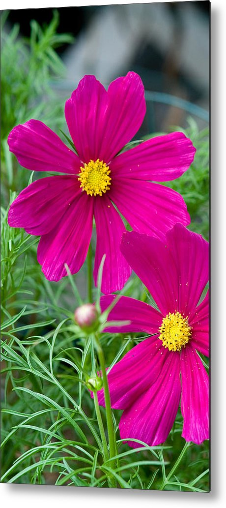 Pink Metal Print featuring the photograph Pink Flower by Michael Bessler