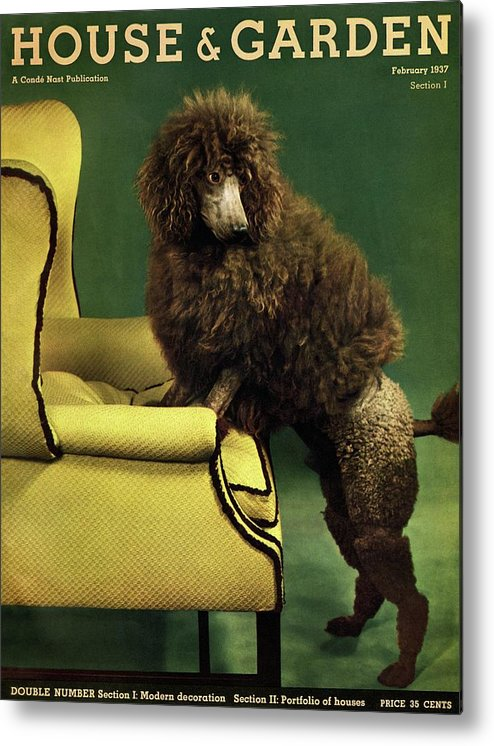 Illustration Metal Print featuring the photograph A House And Garden Cover Of A Poodle by Anton Bruehl