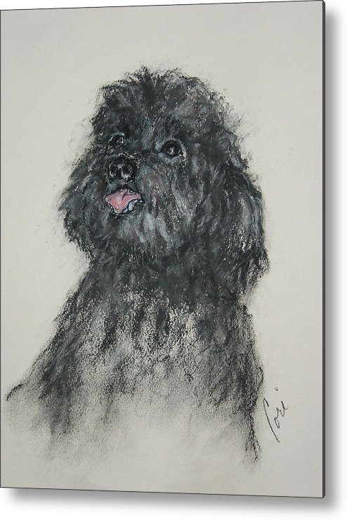 Poodle Metal Print featuring the drawing Gigi by Cori Solomon