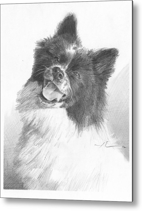 <a Href=http://miketheuer.com Target =_blank>www.miketheuer.com</a> Happy Sled Dog Pencil Portrait Metal Print featuring the painting Happy Sled Dog Pencil Portrait by Mike Theuer