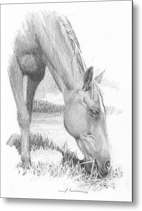<a Href=http://miketheuer.com Target =_blank>www.miketheuer.com</a> Horse Grazing Pencil_portrait Metal Print featuring the painting Horse Grazing Pencil_portrait by Mike Theuer