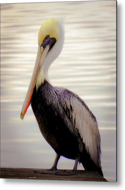 Bird Metal Print featuring the photograph My Visitor by Karen Wiles