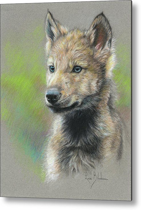 Wolf Metal Print featuring the drawing Study - Baby Wolf by Lucie Bilodeau
