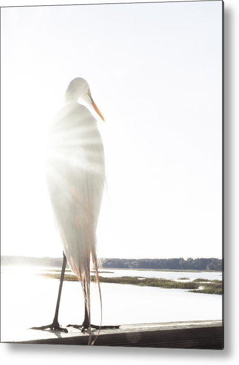 Standing Water Metal Print featuring the photograph Sun Perch by Copyright Dan Smith