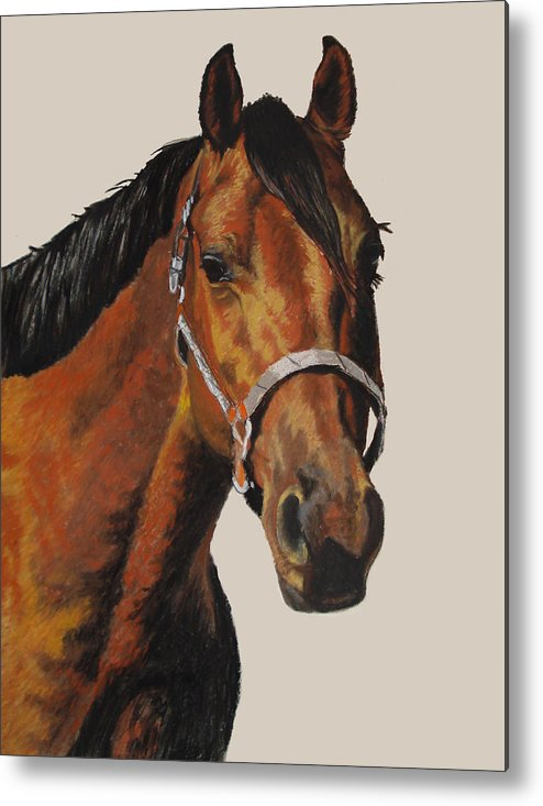 American Quarter Horse Metal Print featuring the pastel Quarter Horse by Ann Marie Chaffin