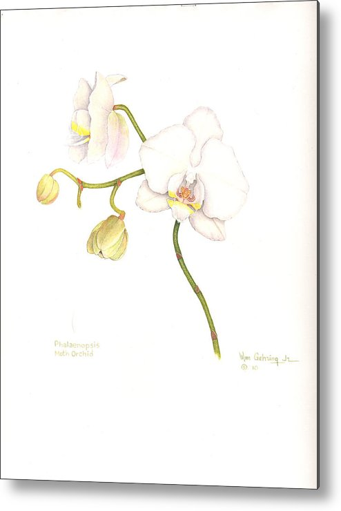 Orchid Metal Print featuring the painting Phalaenopsis Moth Orchid by Bill Gehring