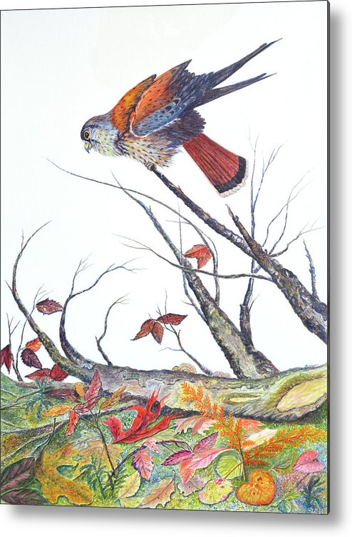 Bird Metal Print featuring the painting American Kestrel by Ben Kiger