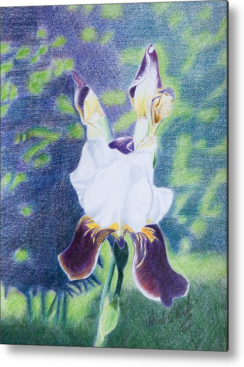 Color Pencil Metal Print featuring the painting Back yard iris by Wade Clark