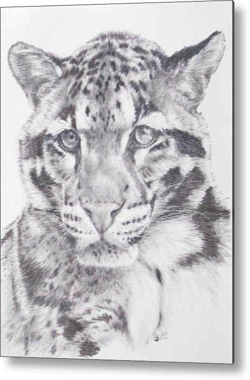 Clouded Leopard Metal Print featuring the drawing Bold by Barbara Keith