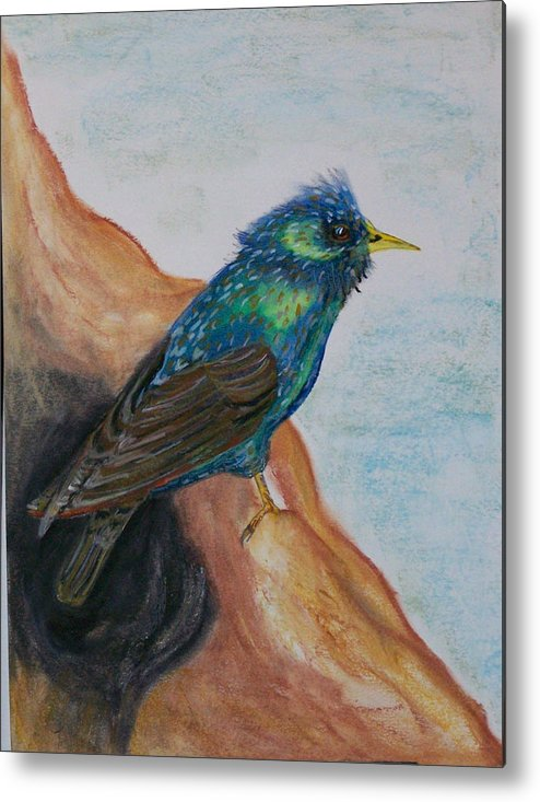 Pastel Metal Print featuring the pastel European Starling by Pamela Wilson