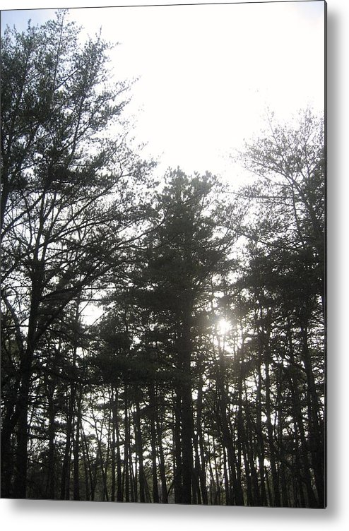 Nature Metal Print featuring the photograph I Walk Among The Trees by Jennifer Sweet