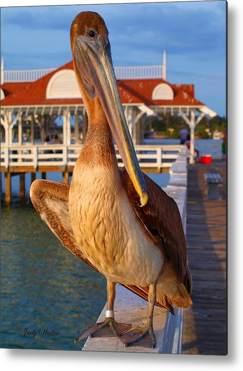 Birds Metal Print featuring the photograph Look At Me by Judy Waller