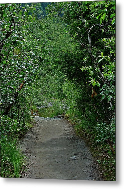 Path Metal Print featuring the photograph Path To Adventure by Diana Hatcher