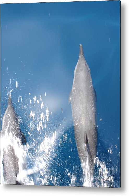 Dolphins Metal Print featuring the photograph Riding the Bow by Chad Natti