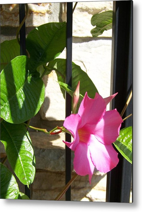 Blossom Metal Print featuring the photograph Summer Blossom by Jackie Mueller-Jones